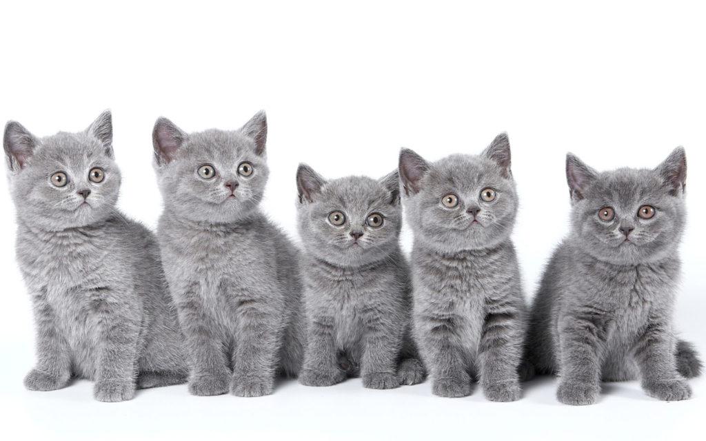 Søde små kattekillinger